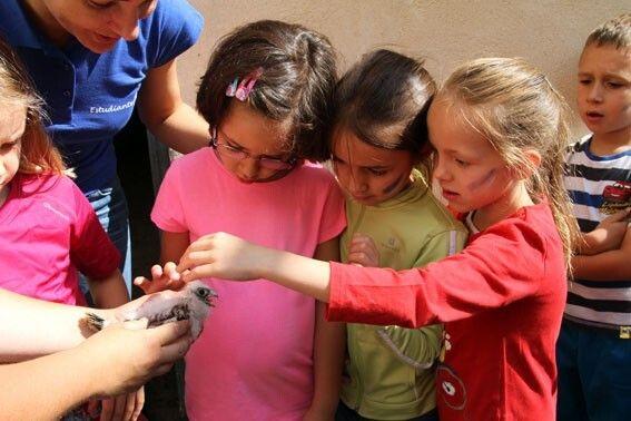 Niños de Quer durante el anillamiento de los cernícalos primilla. Foto eldiadigital.es